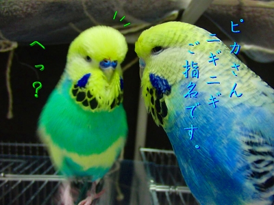 鳥さんって身体が柔らかい4
