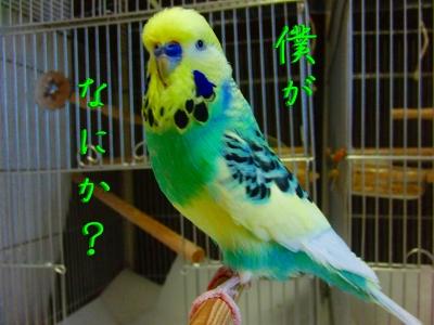 鳥さんって身体が柔らかい3
