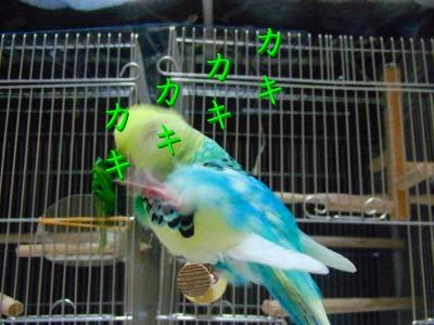 鳥さんって身体が柔らかい2