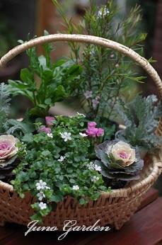 植え替え表の花