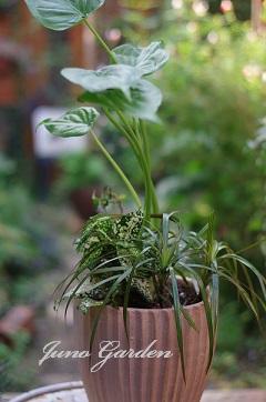 1112観葉植物
