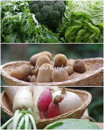 1116貰い物野菜