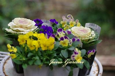 1208職場の花