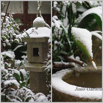 中庭雪1218