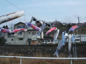 鯉のぼり05
