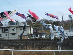 鯉のぼり06