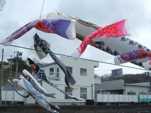 鯉のぼり08