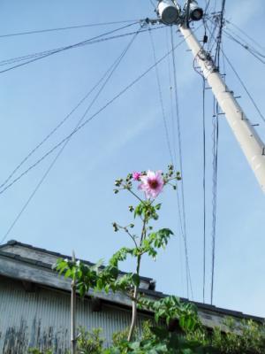 DSCF2292_20121110055806.jpg