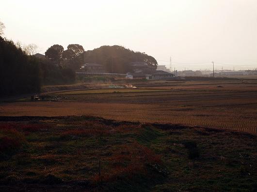 冬の水田03-20131231