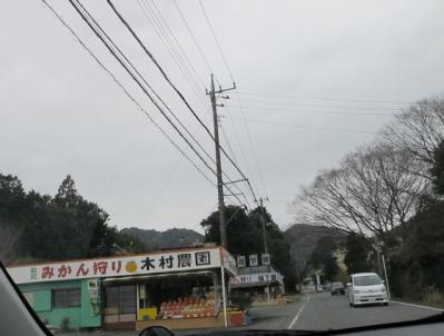 伊豆 ミカン園