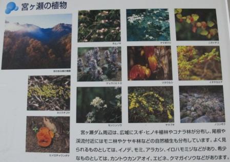 宮ヶ瀬ダム 植物