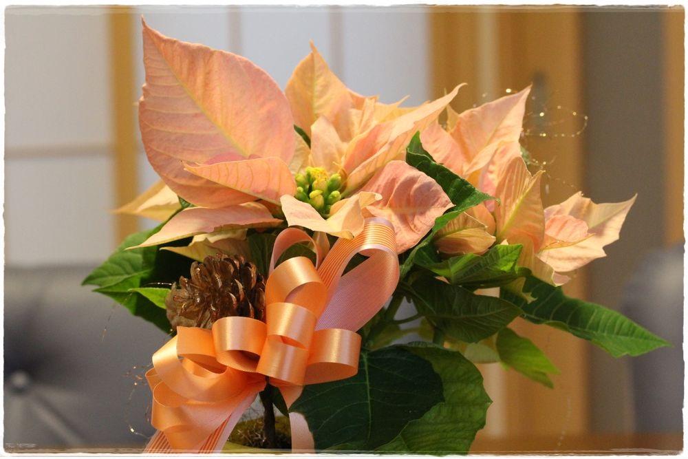 ●SA葉牡丹2012年12月13日正月花_17