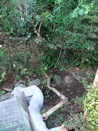 2012.8.22 庭の果樹 040
