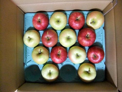 2012.10.6 頂いたりんご 035