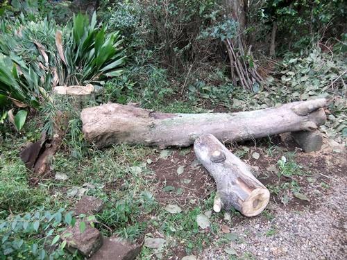 2012.9.26 柿の木伐採 089 (1)
