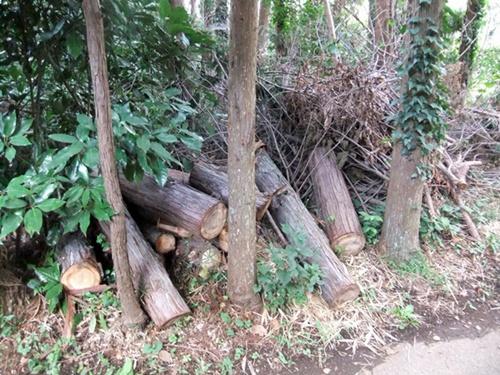 2012.9.26 柿の木伐採 089