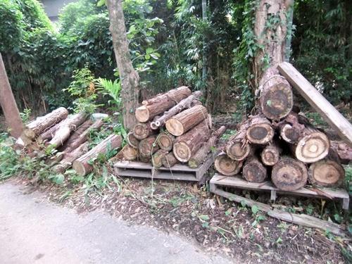 2012.9.26 柿の木伐採 089 (8)