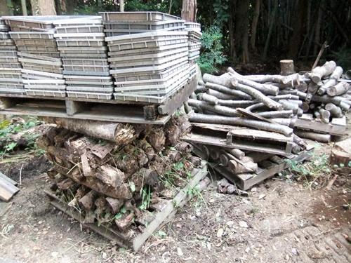 2012.9.26 柿の木伐採 089 (7)