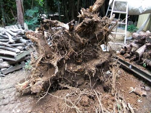 2012.9.26 柿の木伐採 089 (6)