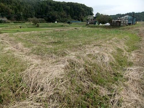 2012.10.24 秋の畑作 036 (5)