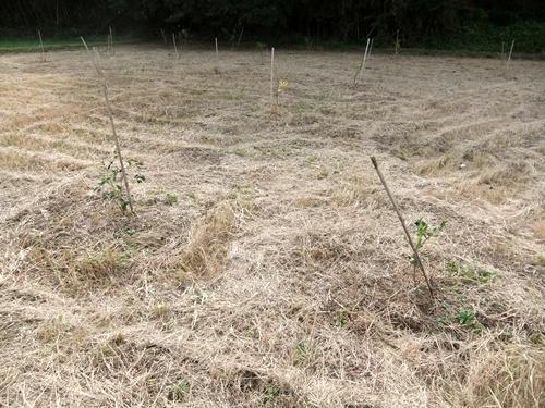 2012.10.24 秋の畑作 036 (6)