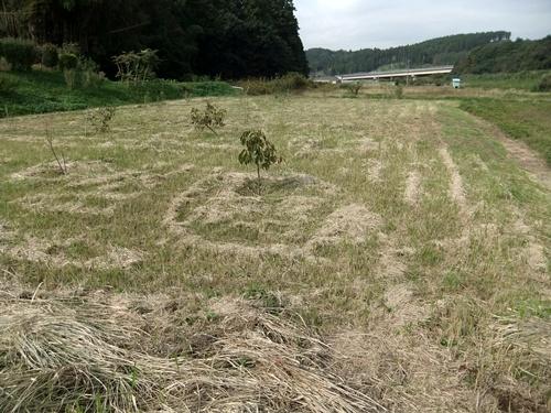 2012.10.24 秋の畑作 036 (4)