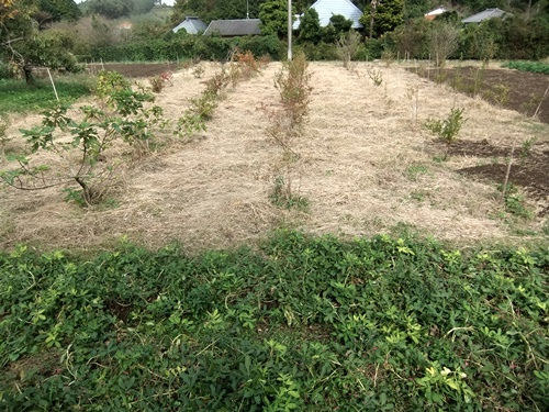 2012.10.24 秋の畑作 036 (2)