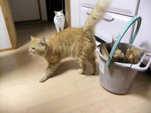 2012.10.19 迷い込んだ猫 006 (1)
