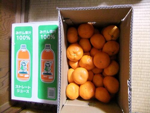 2012.11.4 初みかん 027 (1)