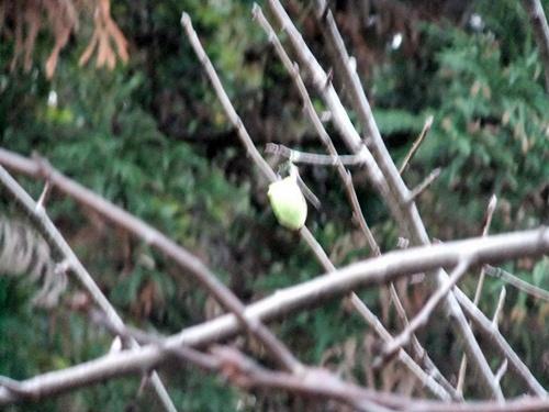 2012.12.23 昆虫の卵 008 (1)
