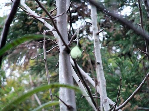 2012.12.23 昆虫の卵 008