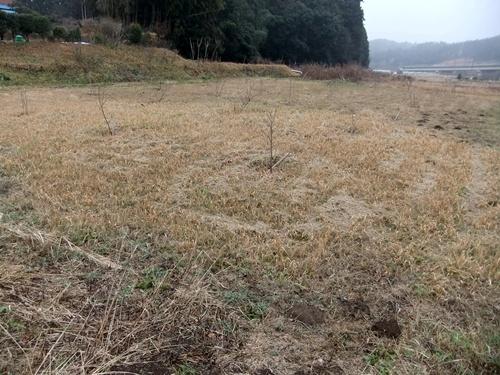 2012.12.30 年末風景(果樹) 041 (4)