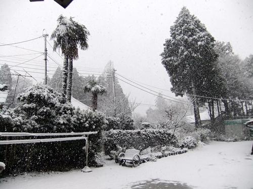 2013.1.14 初雪(定点観測) 004