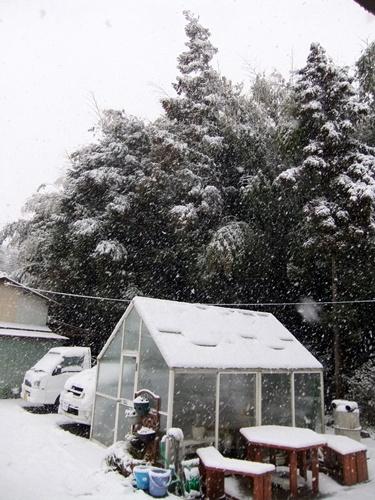 2013.1.14 初雪(定点観測) 005