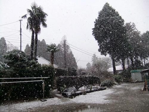 2013.1.14 初雪(定点観測) 003