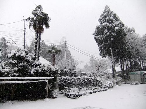 2013.1.14 初雪(定点観測) 008