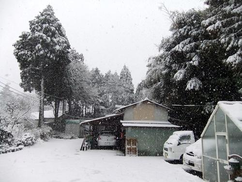2013.1.14 初雪(定点観測) 009