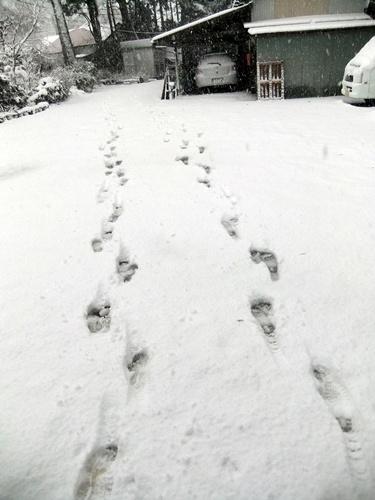 2013.1.14 初雪(定点観測)その2 005