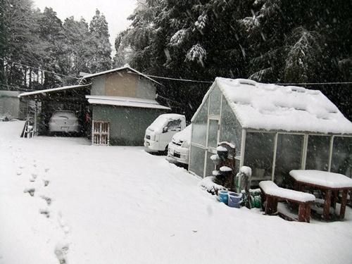 2013.1.14 初雪(定点観測)その2 002