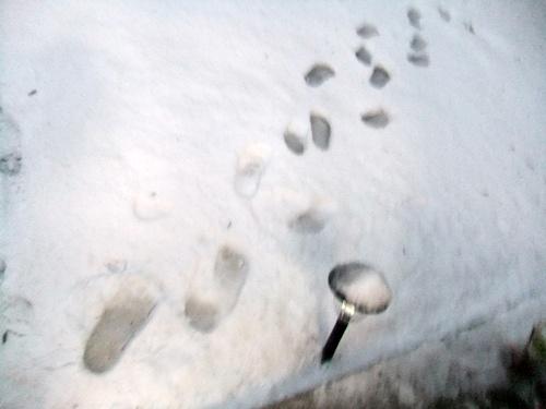 2013.1.14 初雪(定点観測)その2 009