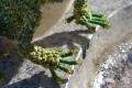 140205緑カエル04