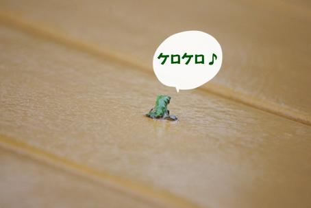 IMGP5482あ