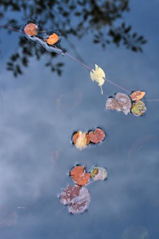 水面に落ち葉。