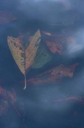 浅い池の底