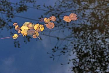 落ち葉の楽譜