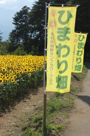 明野ひまわり畑 12.8.28.
