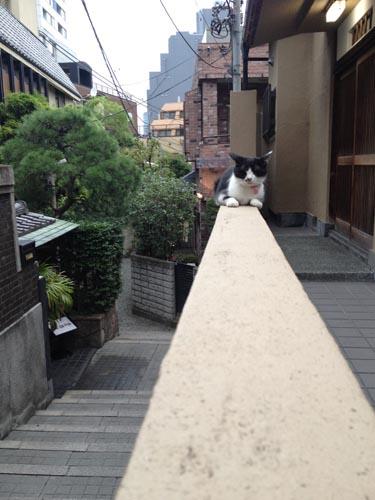 kagurazaka_neko.jpg