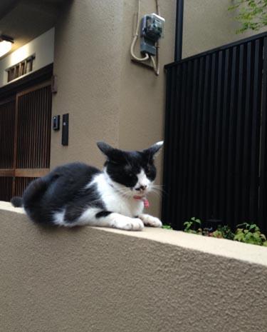 kagurazaka_neko2.jpg