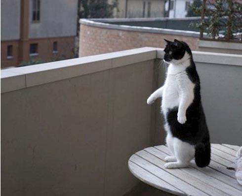 penguinneko.jpg