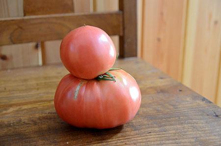 トマトだるま